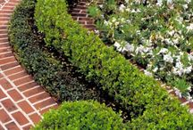BOXWOOD &Topiaries / by Kathy Sue Perdue (Good Life Of Design)