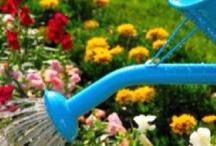 garden gadgets / by Brenda Garrett