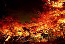 2017 Autumn Leaves