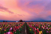 Flower / Color flowers