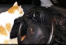 bcause cats