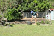 Vege garden tips