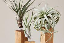 Inspiration | Plants