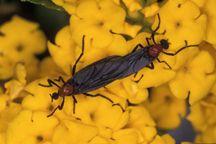 UF/IFAS Entomology & Nematology News