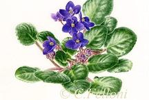Vilola, fialka, violka.....