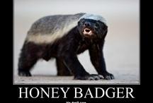 Honey badger haven / by Elanah Sykes