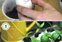 creative seedlings