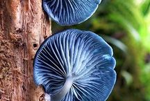 Mushrooms and Foliage