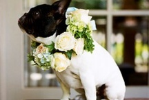 Adorable Animals / Don't forget about the cutest member of your family, your pet! Include your four legged animal pal in your wedding or special event.