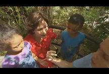 Butterflies and Insects  / field trip to butterfly world and activities for the prek classroom