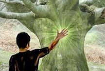 arbre-energie