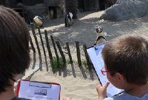 Sea Life / L'actualité en images sur le Sea Life Paris (France) et Blanckenberge (Belgique)