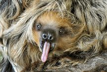 Sloth Life / Sloths are the cutest!