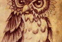 Owls. / Owls & family.