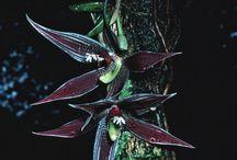 In situ orchids