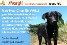 SHARYTI - Tierschutz Andalusien - Wuftel suchen Frau-Herr-Chen!