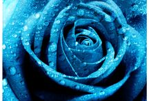 Caleb's True Blue / by Vintage Patterns Dazespast