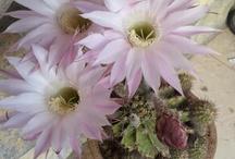 My flowers / bahce