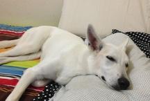 Hera / My dog