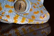 reptiles lagartos
