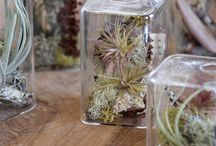 Cloches & Terrariums / A collection of cloches and terrariums that I'd like to make one day. / by Lani