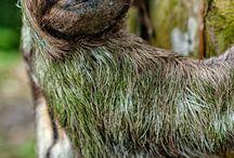 Sloths! :)