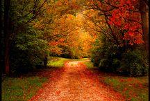 Nature photo's