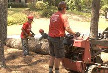 Removal, Cutting & Trimming Services / Tree removal, Tree cutting, and Emergency Tree Removal Service done for customers in Marietta, Ga.
