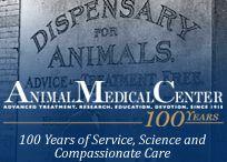 veterinary medicine / by Theresa Pellicano