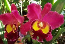 Virágok-növények