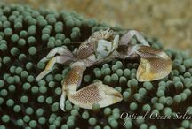 Underwater Macro Photography / Close-ups!  Diopters, + 5,+10,Lens stacking, steady hands, tripods.