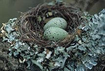 Duck egg blue decor & nests