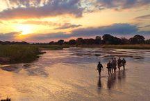 The Safari Index's most eco-friendly lodges