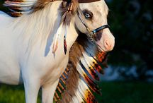Horse decoration