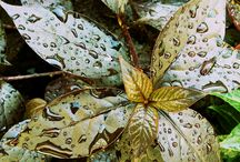 Nature / by Isabelle-Annie Hurtubise