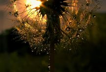 nature and light