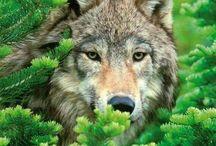 farkas imádók