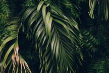 ✿ Plantlife