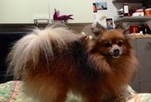 """Vita da Pachi! / A chiunque dice """"vita da cani"""" vorrei far conoscere Paco..."""