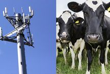 5G small cells need to be tested for health implications before exposing all living creatures