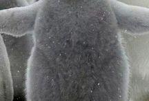 kedvenc téli állatok