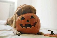 Halloween Doggies! / Tricks and TREATS aren't just for kids ya know!