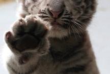 Jungle cats / by Amber Batchelder