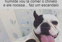 Cão piada