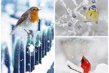 Állatok télen