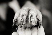 Honden foto's