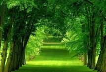 Green and Nature / when see this, peace will flowing