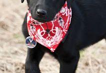 Cute dog / So cute