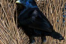 birds / by Alana Shipstone
