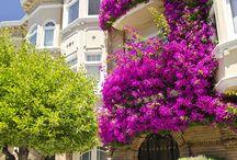 Oola flowers! / by Lori Slavik